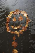Happy dead maple leaves Stock Photos