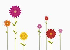 Various colors and sizes of Gerbera Daisies in a row - stock illustration
