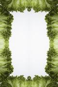 Leaves of green leaf lettuce arranged into a frame on a light box Stock Photos