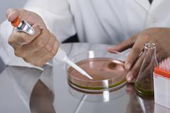 A research scientist using a pipette on a Petri dish Stock Photos