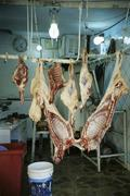 Raw meat hanging in storage room Stock Photos