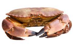 Photo of edible crabs Stock Photos
