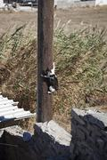 Cat clinging to telegraph pole Stock Photos