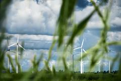 Wind turbines with blades of grass in foreground, Schleswig-Holstein, Germany - stock photo