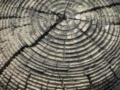 Tree rings on an old cracked tree stump Stock Photos