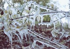Close up of ice formed on a plant Stock Photos
