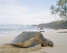 A tortoise lying on a beach Stock Photos