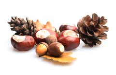 chestnuts and acorns - stock photo