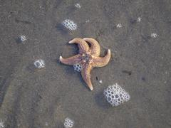 Sea star in the water - stock photo