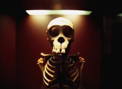 Front view of animal skeleton under lamp, British Museum, London, England Stock Photos