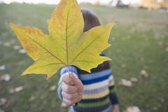 A young boy holding a leaf in front of his face Stock Photos