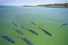 School of fish swimming in wildlife reserve, Xel-Ha, Mexico - stock photo