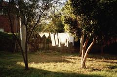 Clean clothes drying on clothesline in back yard - stock photo