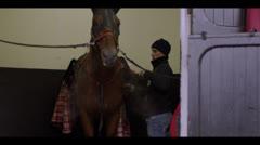 HORSE SHAKING HEAD Stock Footage