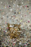 Gold piggy bank amongst floating confetti Stock Photos