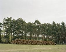 Stack of timber by forest - stock photo