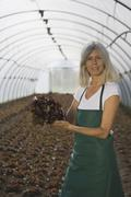 Farm worker, holding lettuce in greenhouse - stock photo