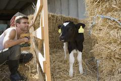 Farm worker watching at calf - stock photo