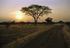 Remote road and silhouette of tree at sunset, Namibia Stock Photos