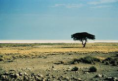Tree on open plain, Etosha National Park, Namibia Stock Photos