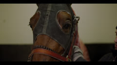 HORSE FACE CLOSE-UP 2 Stock Footage