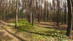 Walking POV in the forest, wide angle - stock footage