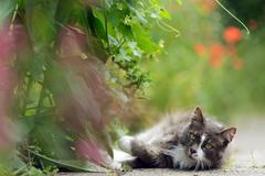inquisitive little grey cat - stock photo