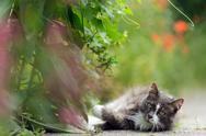 Inquisitive little grey cat Stock Photos