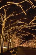 Trees with strands of Christmas lights Stock Photos