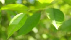 Vivid green leaves background with bokeh, close-up Stock Footage