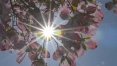 Sunshine through pink flowers - stock footage