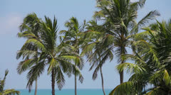 Group of coconut palms on the tropical ocean coast Stock Footage