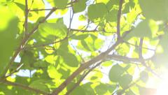 Bright green leaves with sun, nature background Stock Footage