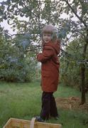 Girl picking apples in the garden Stock Photos