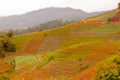Arable farmland with fresh  at spring in thailand Stock Photos