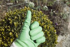 Hand wearing a gardening glove showing thumbs up Stock Photos
