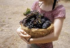 Midsection of a woman carrying a basket of grapes Stock Photos