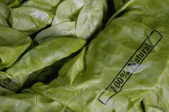 Butter lettuce stamped '100% Natural' Stock Photos