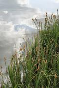Grass reeds at the edge of a lake Stock Photos