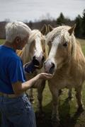 A man feeding two horses in a paddock Stock Photos