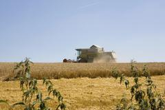 A combine harvester in a wheat field Stock Photos