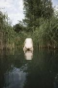 A naked woman resting on the back of a naked man standing in a pond Stock Photos