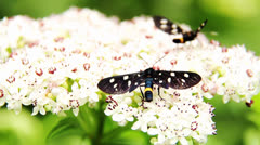 Butterflys on the flower Stock Footage