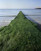 Breakwater covered with algae on Brighton Beach, England Stock Photos