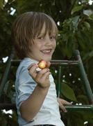 A boy picking cherries from a tree Stock Photos