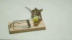 Funny little mouse eating cheese of the mousetrap Stock Footage
