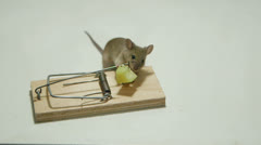 A mouse trap has free cheese Stock Footage