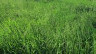 Stock Video Footage of Meadow grass