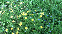 Blue yellow green nature Stock Footage