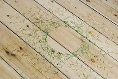 Stock Photo of Pine needles scattered on the floor